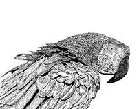 M_TALLER DIGITAL-Ilustración de Guacamaya