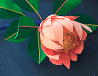 King Protea Flower Project