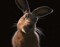 Haas - Brand Rabbit