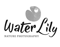 Water Lily Nature Photography Branding