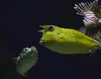 Let your imagination swim wild - New England Aquarium