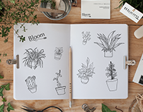 Bloom - Brand and Packaging Design