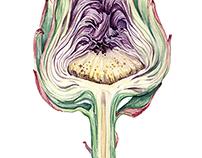 Watercolor Botanical Illustration of Green Veggies