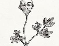 Herbilis