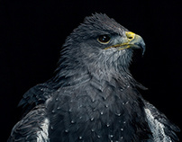 Falconry portraits for Countryfile Magazine