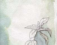 Poetic Plant Life