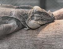 Zoo (BKK,Thailand)