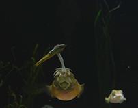 Cuttlefish slow motion dinner - New England Aquarium