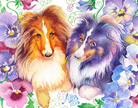 2 Shelties (for Patti)