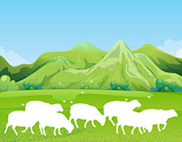 SHEEP IN GREEN FIELD COMPLETED PROJECT