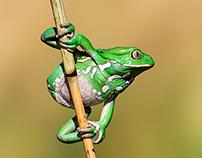 Reptiles - Amphibians - Arachnids