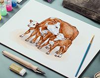 Hand drawn illustrations