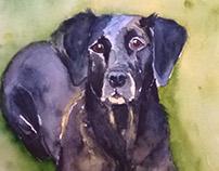 Labrador portrait, watercolor