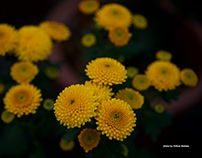 Cute flowers #1