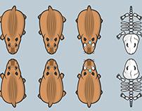 Capybara character design