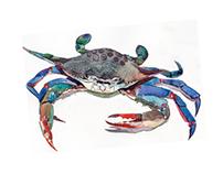 Maryland blue crab, phone pixel worse