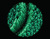 Microscope / Microscópio