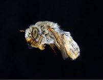 Bees beneath