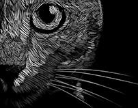 Cat Dark Ligth