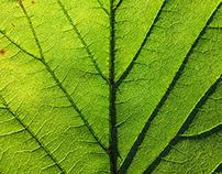 Macro Photograph Of A Leaf