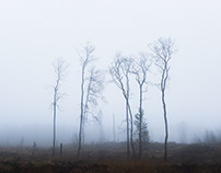 Remains of a Great Forest - Sweden