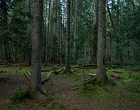 Forest on Tara mountain, Serbia, august 2018.