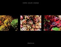Forme - Colori - Essenze