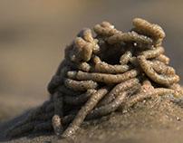 Beach trilologyz Wormshit