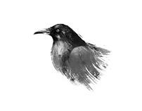 animals - illustrations