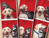 Purina Picture Paw-fect Competition Campaign