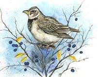 Bird calendar 2017