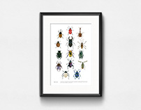 Beetles / Watercolor
