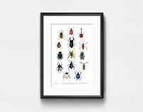 Beetles / Watercolor