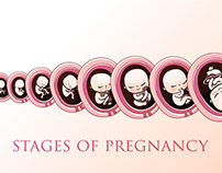"""Illustration of the """"stage of development of pregnancy"""""""