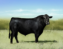 Black Angus illustration, airbrush style