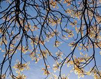 Voyage au pays de l'arbre aux feuilles d'or