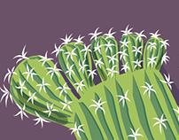 Il patto del cactus Socks with thorns!