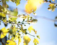 Fig in Bloom