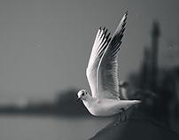 Seagulls Story