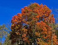 MAGYAN CREATIVE: Early Fall