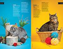 2014 Pet Issue | Orlando Magazine