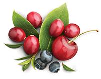 Fruits organiques