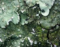 - Fotografía Microscópica II -