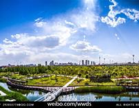 风光摄影桥园公园