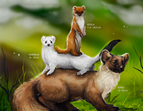 Mustelidae size comparison