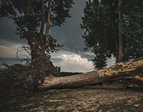 Storm and Roots