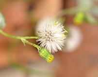 Macro lens photography