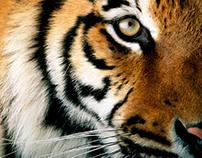 WWF 40 Years