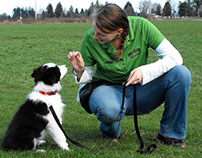 Tips for Training a Border Collie