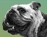 #46: Bulldog